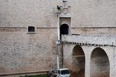 Rimossa parietaria dalle facciate del Castello di Barletta