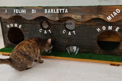 Festa Nazionale del Gatto, un pensiero per i felini di Barletta