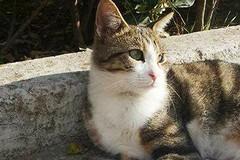 «Salviamo i gatti randagi in zona Patalini»