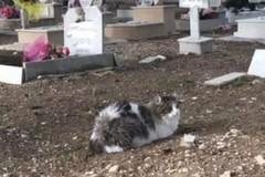 """Cimitero di Barletta, i gatti a """"guardia"""" delle anime dei defunti"""