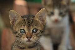 Da oggi a Barletta sarà attivo il servizio di soccorso degli animali a cura di Enpa
