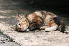 Sospetti avvelenamenti di gatti, la notizia arriva alla Procura della Repubblica