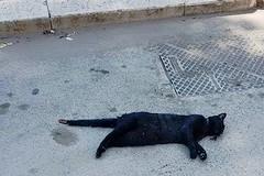 Strage di gatti avvelenati, mistero in zona Patalini