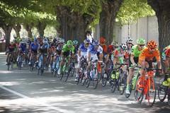 Il Giro d'Italia arriva a Barletta, verso le 12 il passaggio dei ciclisti