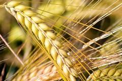 Disagi per gli agricoltori di Barletta, un incontro con l'assessore regionale Di Gioia