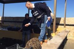 Capitaneria di porto di Barletta, sequestrati 700 kg di mitili