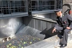 Sequestrate 400 tonnellate di olio d'oliva dalla guardia di Finanza di Barletta