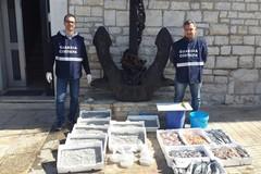 Oltre 200 kg di pesce, novellame e frutti di mare sequestrati a Barletta