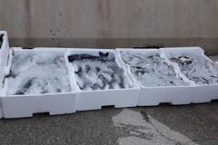 Sequestrati a Barletta 140 kg di pesce e bianchetto, tutto in beneficenza alla Caritas