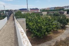Comincia una nuova vita per l'orto botanico di Barletta