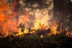 La provincia Barletta-Andria-Trani martoriata dagli incendi