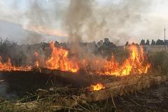 Divampano le fiamme in un canneto a Ponente, bruciano anche rifiuti