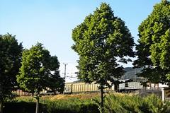 Giornata nazionale degli alberi, a Barletta saranno piantati oltre 20 arbusti