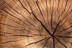 Lavorazione del legno: in aumento gli acquisti online di troncatrici