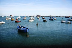 """""""Clean Sea Life"""", il progetto europeo approda anche a Barletta"""