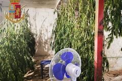Coltivava marijuana nella sua abitazione, arrestato un 43enne a Barletta