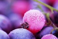 Neve nella Bat, salgono alle stelle i prezzi di frutta e verdura
