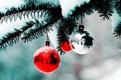 Natale a Villa Bonelli, luci e presepe in periferia