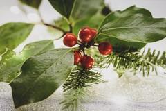 Beni e siti culturali durante il periodo natalizio: tutte le informazioni