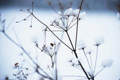 Freddo e gelo in arrivo, scatta l'allerta meteo