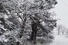 Arriva la prima neve nella Bat