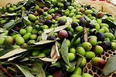 Furti in campagna, sorpresi a rubare due quintali di olive