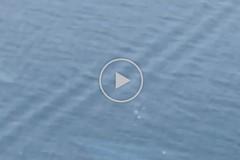 Terremoto nell'Adriatico, le immagini dell'onda anomala dopo la scossa