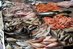 Fermo pesca in Puglia, Coldiretti: «Attenzione alle truffe»