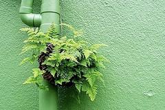 Bisogna riqualificare il verde in via Pappalettere