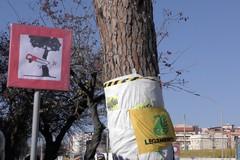 Pino di via Vittorio Veneto, Legambiente: «La partita è ancora aperta»