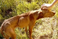Cane in pericolo di vita sulla SS16bis tra Barletta e Trani