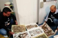 Sequestrati dalla Guardia Costiera 500 kg di prodotti ittici
