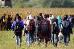 """Accoglienza dei migranti, Forza Italia sostiene il """"taglia-business"""""""