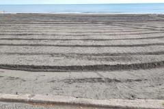 Al via la pulizia di Bar.S.A. su spiagge e litorali a Barletta