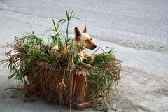 Barletta convive coi cani randagi