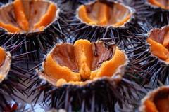 Ricci e molluschi sequestrati in alcuni ristoranti di Barletta