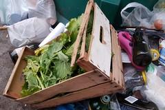 Cassonetti per l'umido in strada a Barletta: esperimento fallito