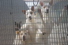 Rifugio comunale per cani di Barletta, Falcone: «Impegno ineccepibile»