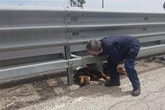 Individuata la proprietaria del cane investito sulla SS170