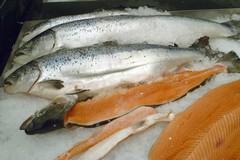 Maxi sequestro di prodotti ittici della Capitaneria di Porto a Barletta in piazza Di Vittorio