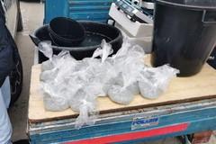 Guardia Costiera, a Barletta sequestrati 40 Kg di prodotti ittici