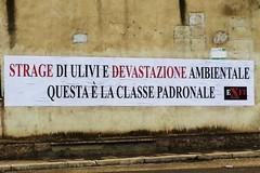 Strage di ulivi, Dileo: «Colpa degli imprenditori di Barletta»