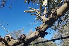 «Gli agricoltori di Bari e Bat aspettano i fondi delle gelate 2017 e 2018»