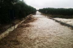 Coldiretti Puglia, piove sul bagnato nelle campagne pugliesi