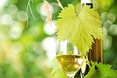 """""""Cantine in piazza"""": valorizzazione dei vini e conoscenza del mondo agricolo locale"""