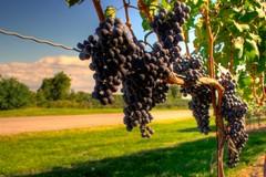 Fiera internazionale del vino, presente anche Barletta