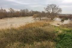 Inquinamento del fiume Ofanto, interviene il senatore Quarto