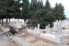 Crolla un albero sulle lapidi, disagi al cimitero di Barletta