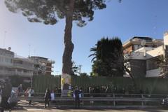 Sospensione dell'abbattimento del pino di via Vittorio Veneto