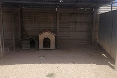 Più ombra per i cani del rifugio comunale di Barletta